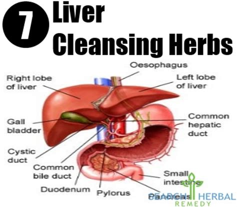liver cleanse itching.relief picture 13