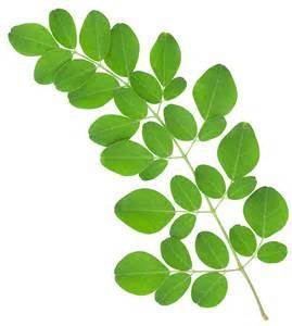 herbal na pampakinis ng mukha picture 5