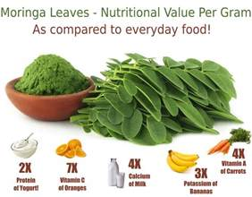 can moringa cure h picture 2