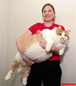 big fat picture 15