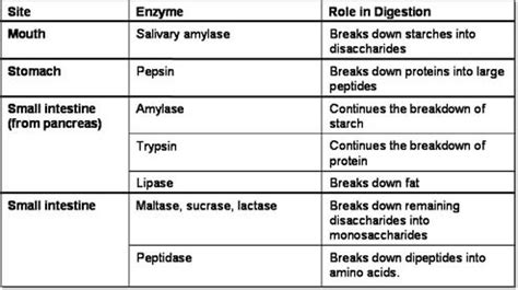 amino acids and enzymes do they increase blood picture 11