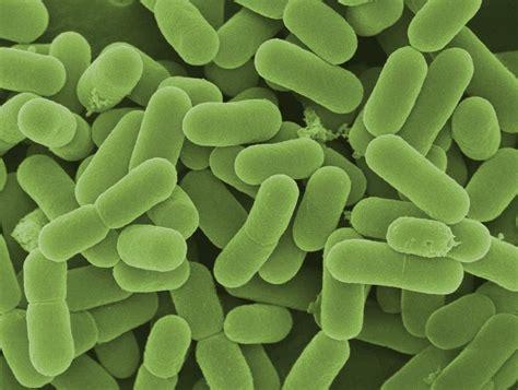 probiotics and colitis picture 3