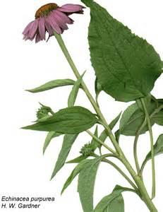 quantum herbal throat spray picture 11