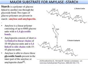 alpha amylase amylose digestion picture 7