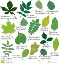 green leaf kratom picture 10
