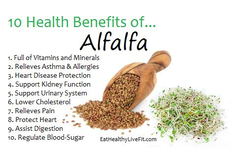 benefits of alfalfa picture 1