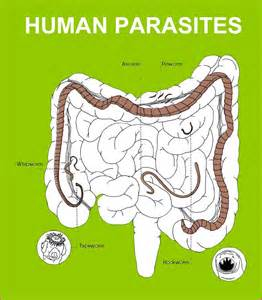body cleanse parasites picture 3