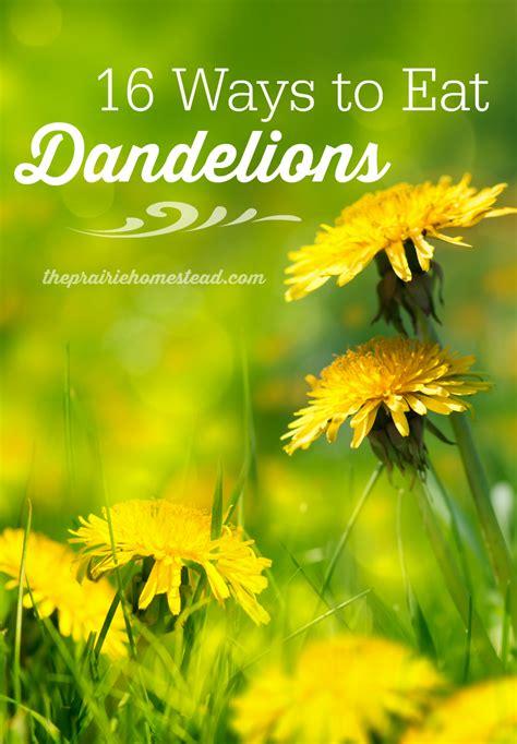 dandelion recipes picture 1