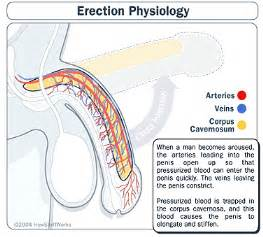 erection suppliments picture 3