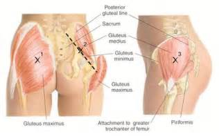 glute +pain trochanter +nerve picture 1