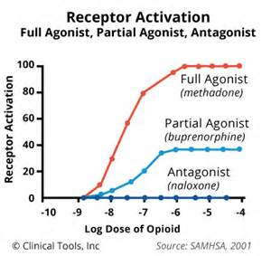 natural opioid receptor antagonist picture 5