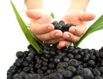 acai berry benefits for lung cancer patients picture 6