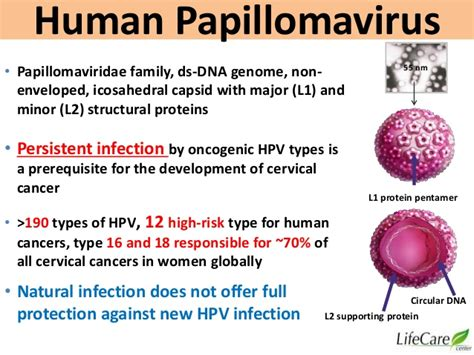 minor hpv in women picture 3