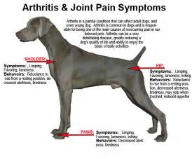 joint pain and dogs picture 2