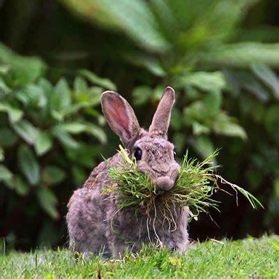 bunnies diet picture 5