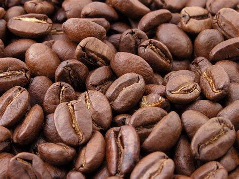 green coffee beans in philippines picture 2