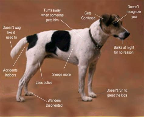 hing puppies symptoms picture 3