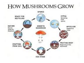 stop grow ingredients picture 1