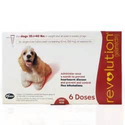 dog bladder control picture 13