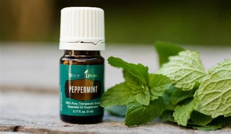 libido essential oil peppermint picture 6