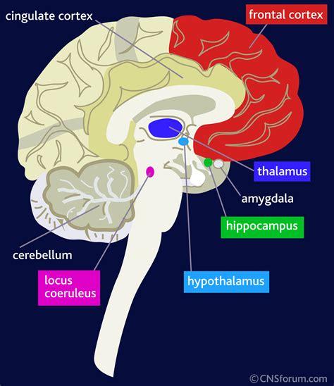 prognosis of insomnia picture 14