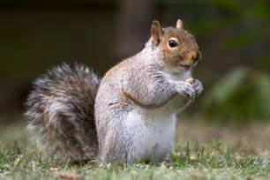 picture of squirrel h picture 2