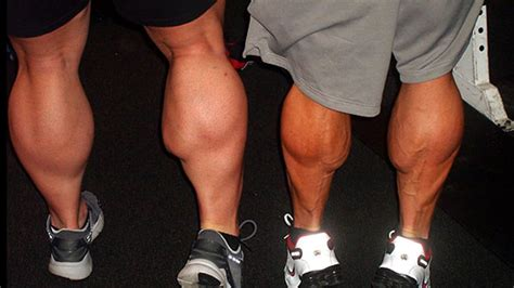calf muscle picture 2