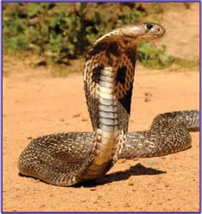 actual pictures of snakes h picture 9