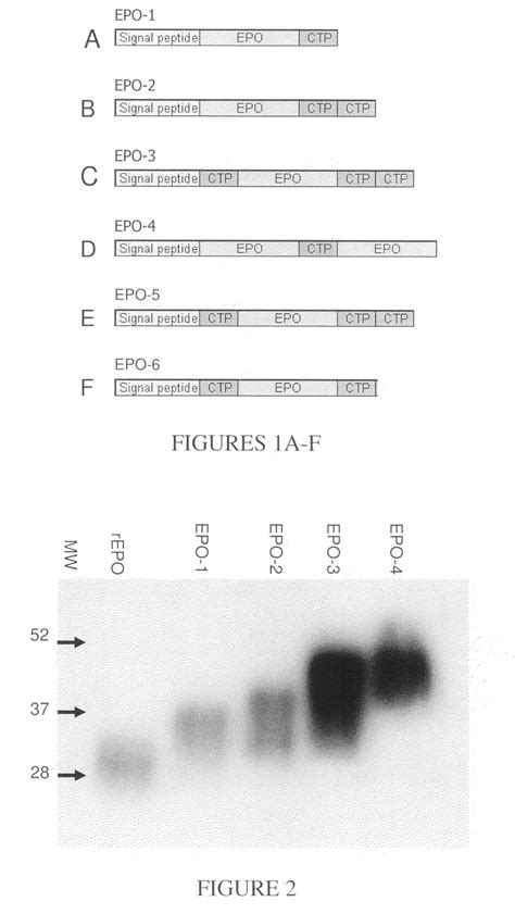 hgh protein peptide language:en picture 2