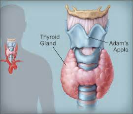 how do you treat greatly enlarged thyroid picture 14