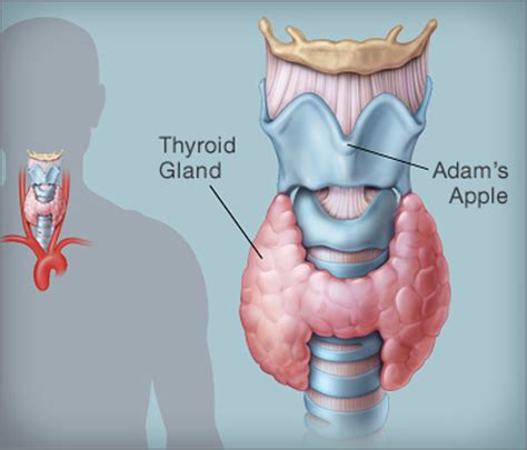 why do thyroid problems cause palpitations picture 9