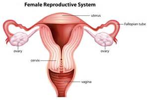 what happens if women take an ovary feminizing picture 8