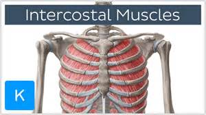 intercostal muscle pain picture 21