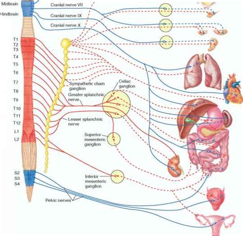 what is in the liver picture 14