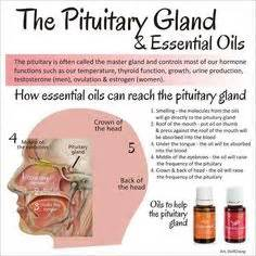 essential oils to help reduce the side effects picture 7