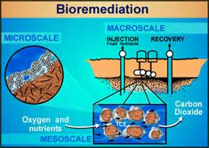 microbial remediation picture 6