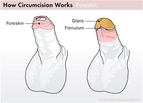 soft cut penis picture 2
