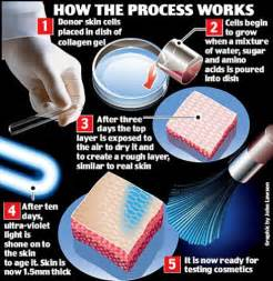 how cultured skin is made picture 2