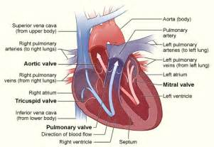 erectile dysfunction and aortic heart valve picture 8