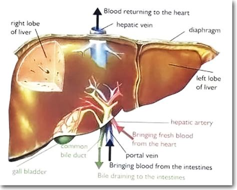 liver cancer stage 4 picture 15