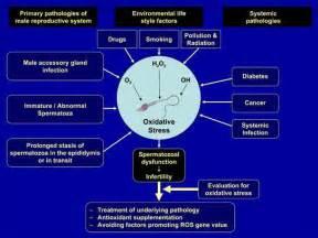feminization hormones effects on men picture 7