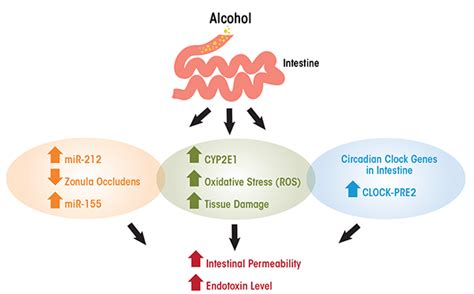 liver enzyme function picture 18