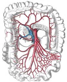 nonrotation of bowel and small mesenteric artery picture 18