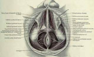 how to popularly stretch the perineum picture 14