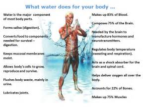 stametta body healing liquid side effects picture 5