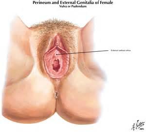 female urethra picture 1