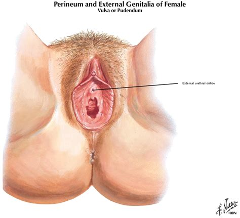 women urethra picture 18