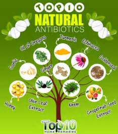 natural supplements to kill bacteria picture 5