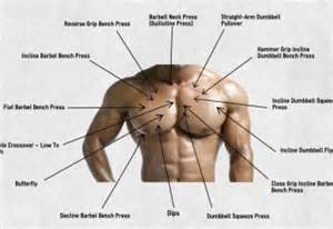 exercises for every muscle picture 3