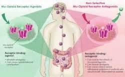 what supplement binds to opiate receptors picture 2